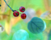 Berries, Buds, and Seeds