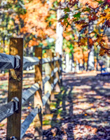 Fence with Autumn Trees II